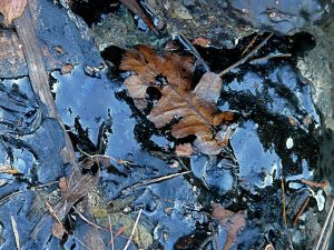 leaves on the ground covered in oil